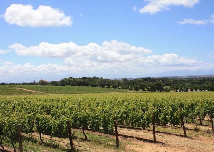 Visite de vignoble lors d'un voyage CE en Afrique du Sud