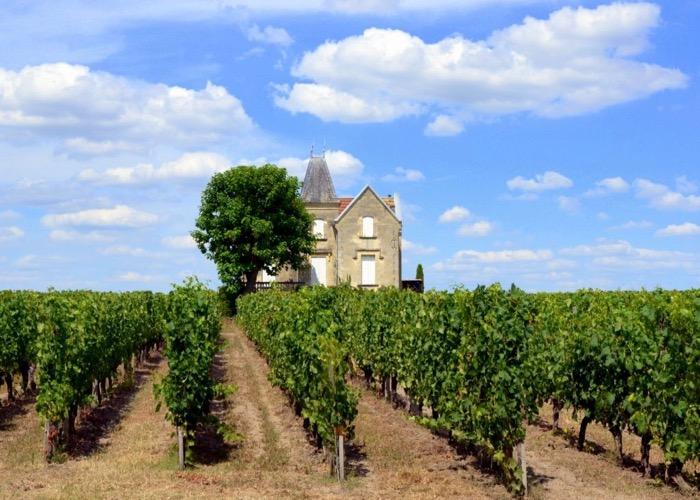 Balade dans les vignes lors d'un séminaire à Bordeaux