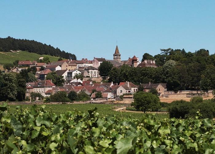 Visite de vignoble lors de votre séminaire en Bourgogne