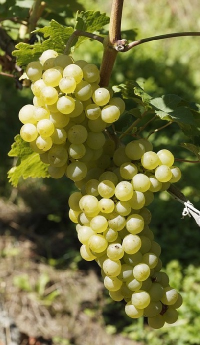 Visite de vignoble et dégustation lors de votre séminaire en Bourgogne