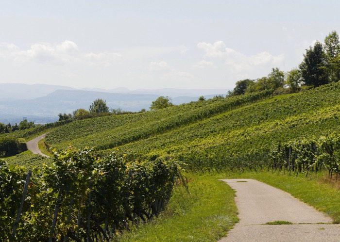 Route des vins et Visite de vignoble lors de votre voyage en comité d'entreprise en Bourgogne