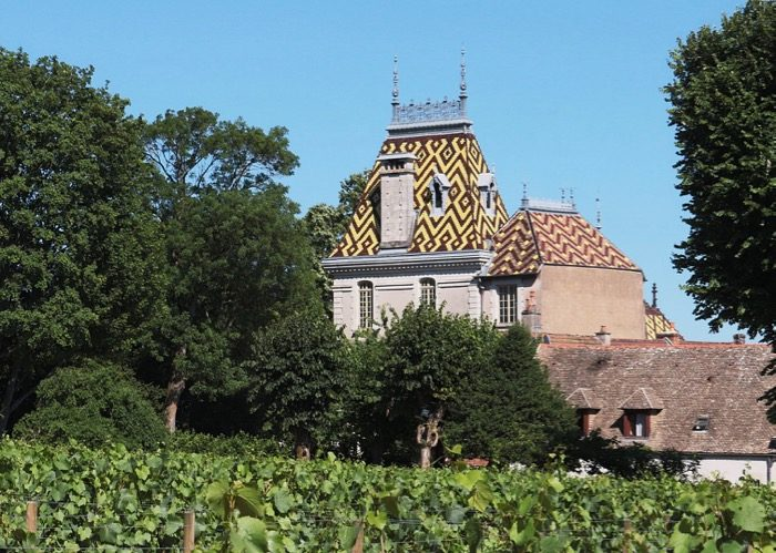Visite de vignoble lors de votre voyage en comité d'entreprise en Bourgogne