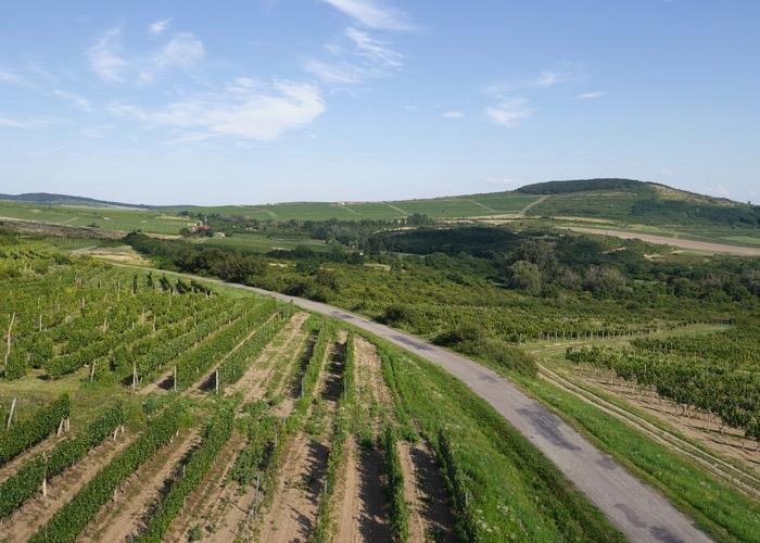 Visite de vignoble lors d'un séminaire à Budapest en Hongrie
