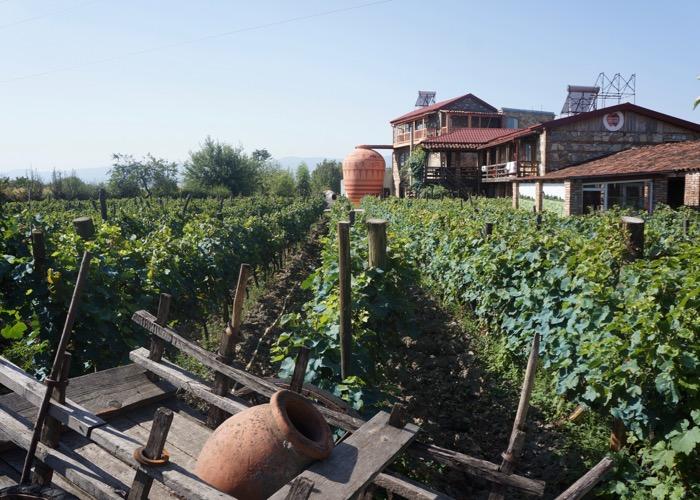 Incentive en Géorgie et découverte des vins et de la gastronomie locale