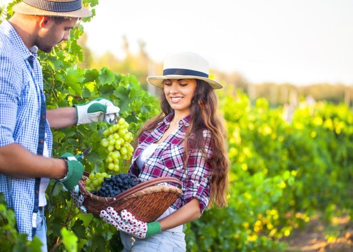 visite de vignoble lors d'une Incentive en Géorgie et découverte des vins et de la gastronomie locale