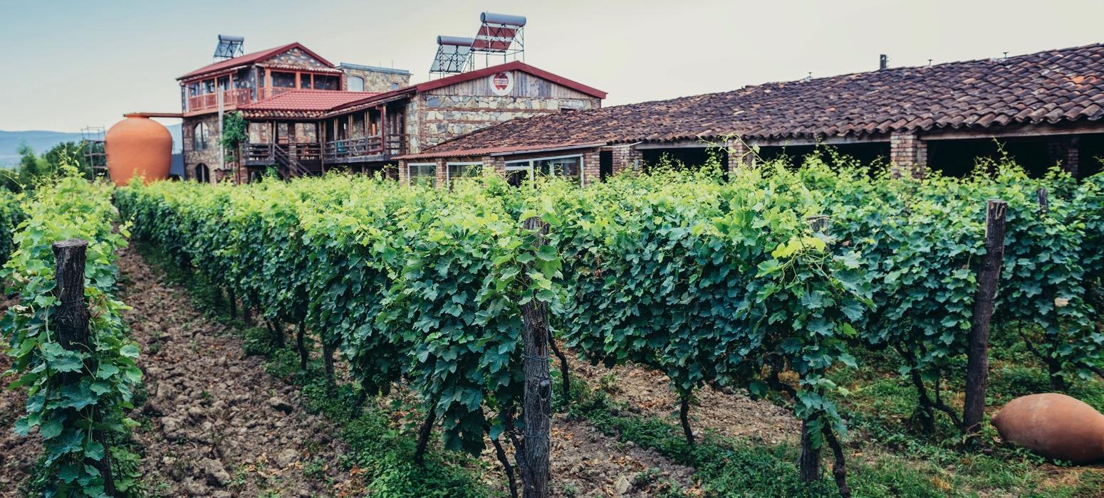 Partez en Incentive en Géorgie et découverte des vins et de la gastronomie locale et visitez ses vignobles