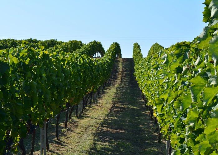 Visite vignoble Incentive en Grèce et découverte des vins et de la gastronomie locale