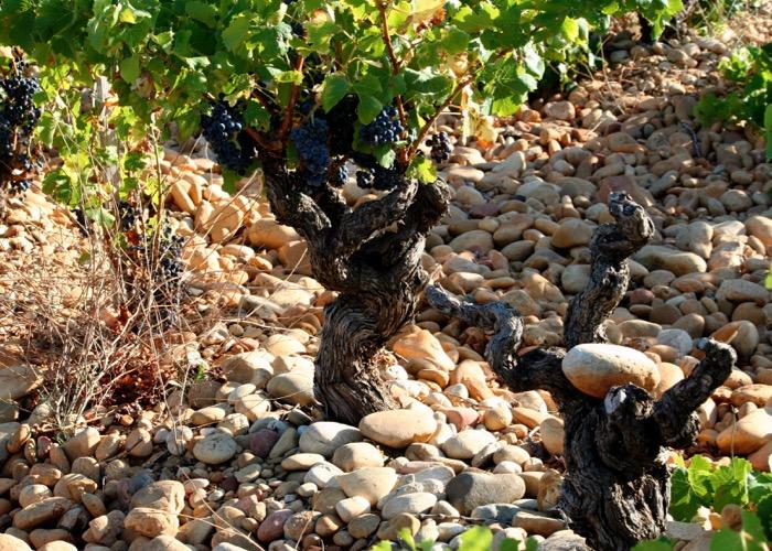 vigne ; Lyon ; galets ; roulés ; vin ; balade ; visite ; vigne