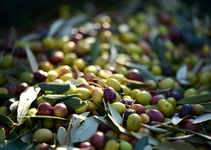 Découvrez la dégustation d'huile d'olive et les produits locaux lors de votre séminaire en Provence
