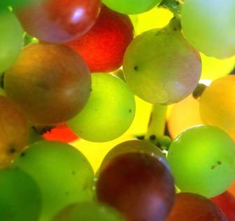 Découvrez les vignobles de la région de la Rioja lors d'un séminaire en Espagne