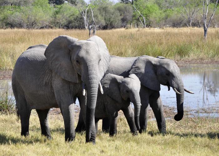 Visite d'un safari avec un guide lors d'un voyage CE en Afrique du Sud