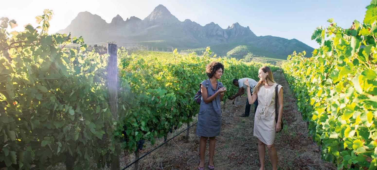 Visite de vignoble lors d'un voyage en comité d'entreprise en Afrique du Sud