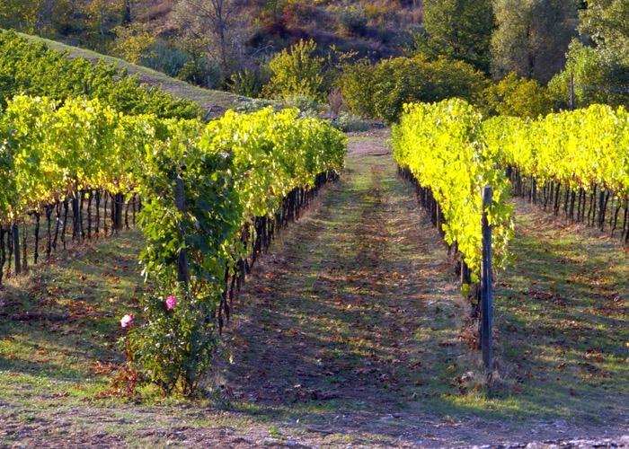 Découvrez les vignobles d'Italie lors de votre séminaire en Toscane
