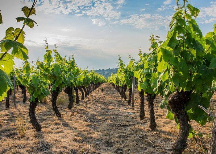 Visite de vignoble lors d'un séminaire d'enterprise dans le Beaujolais