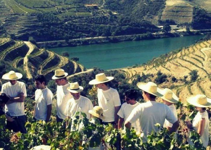 visite ; domaine ; viticole ; vigne ; Portugal ; séminaire ; activité ; découverte ; vin ; dégustation ; Douro ; Portugal