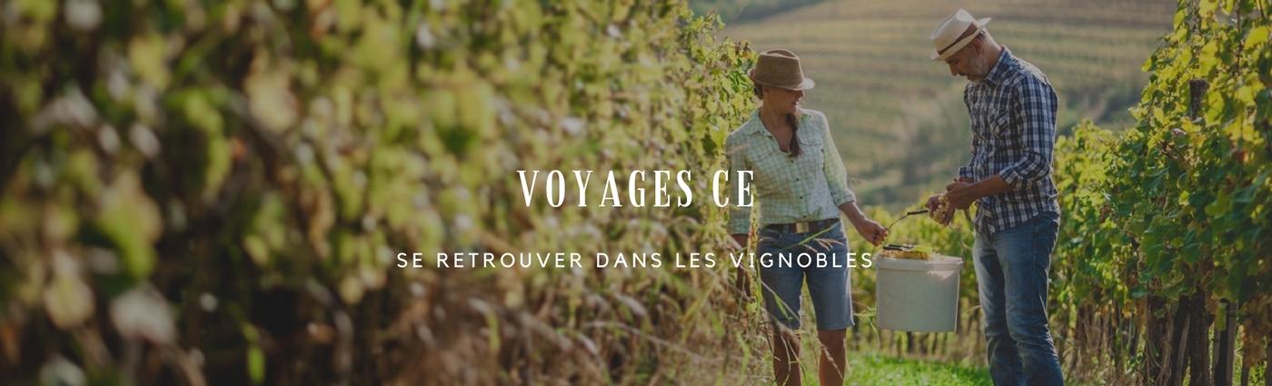 Voyage ; comité d'entreprise ; vigne ; vignoble ; activité ; vendange