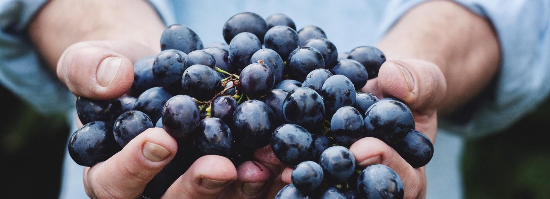 vin, dégustation, évènement, grape de raisin, raisin, vigneron, découverte, oenotourisme, vin ; équipe