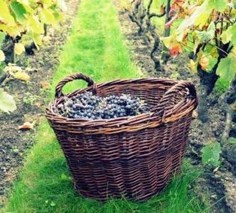 Balade et dégustation dans un domaine viticole à Saint-Emilion lors d'un séjour oenologique pour votre séminaire à Bordeaux